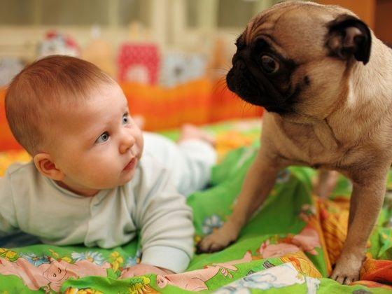 bebe-olhando-para-um-cachorro-da-raca-pug-foto-konstantin-sutyaginshutterstock-000000000000637C.jpg